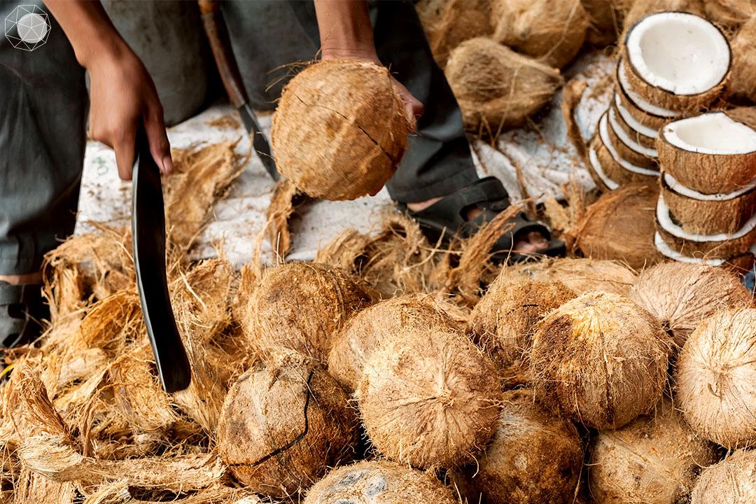 การทำไม้พาเลตจากกาบมะพร้าว (Cocopallets) นอกจากจะช่วยลดการเผากาบมะพร้าวและการตัดต้นไม้จำนวนหลายล้านต้นแล้ว ยังช่วยเพิ่มรายได้ให้กับเกษตรกรที่ปลูกมะพร้าวด้วย