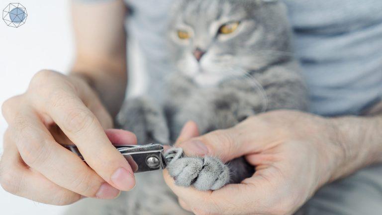 วิธีตัดเล็บแมว
