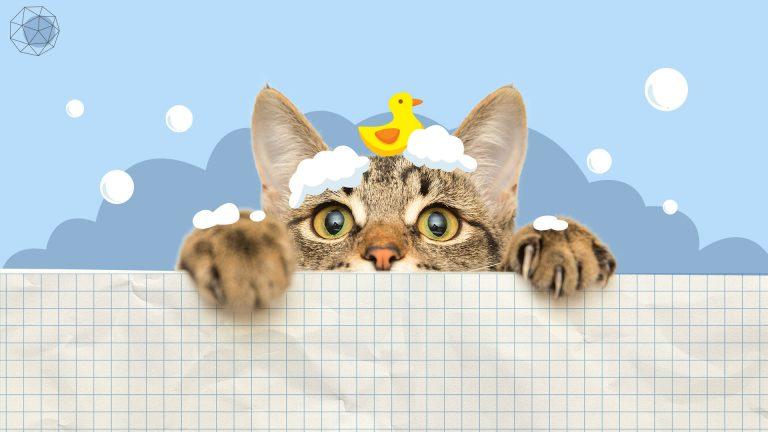วิธีอาบน้ำแมว