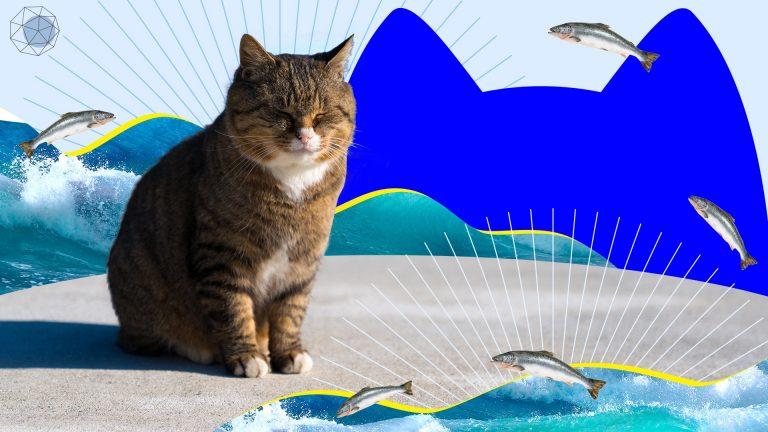 เที่ยวเกาะแมว