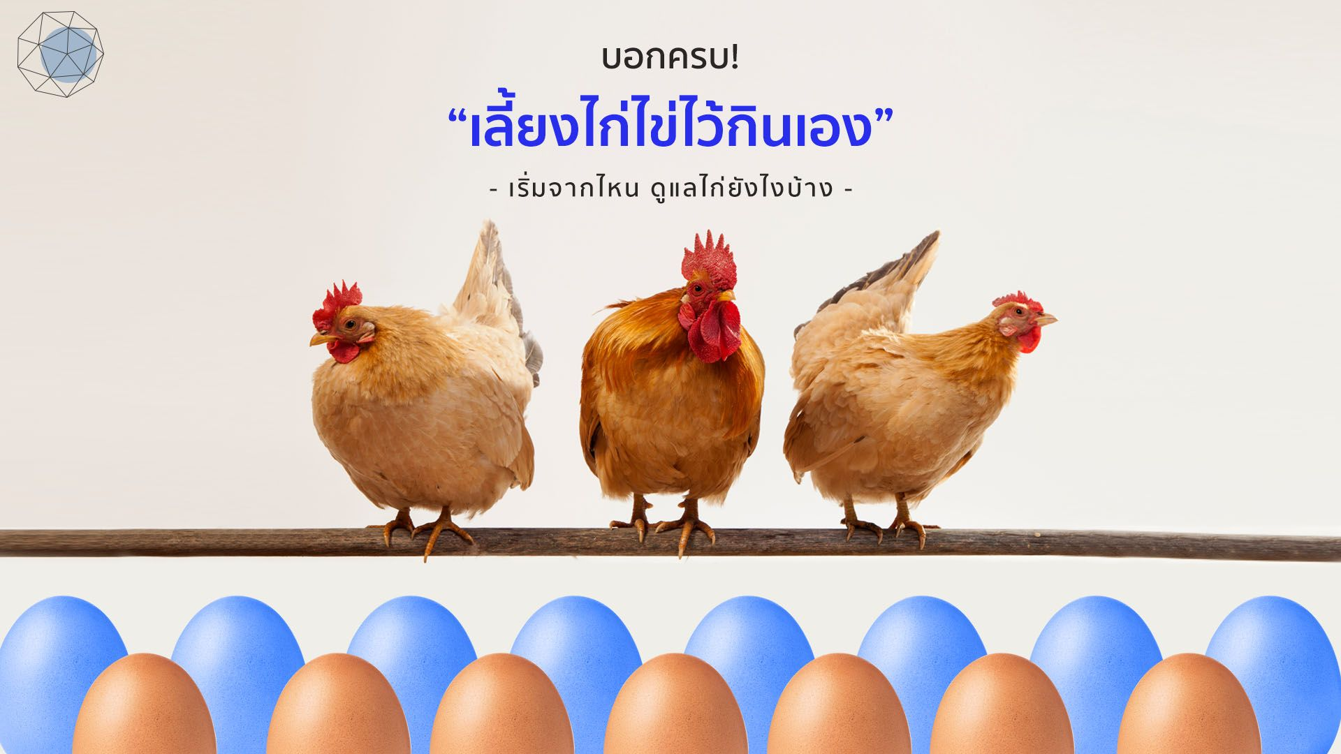 """""""เลี้ยงไก่ไข่ไว้กินเอง"""" เริ่มจากไหน ดูแลไก่ยังไงบ้าง"""