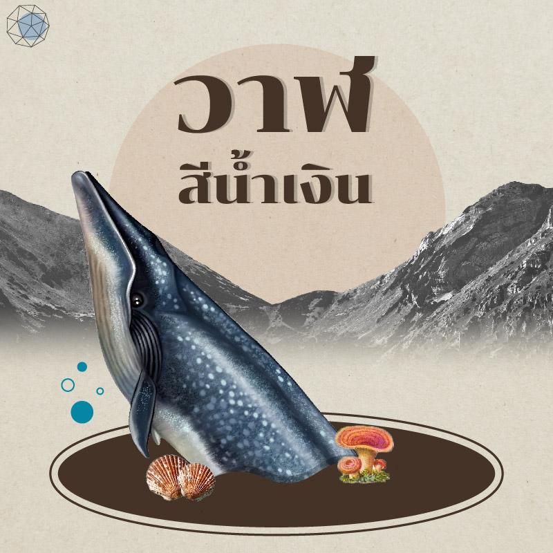 สัตว์ใกล้สูญพันธุ์-เสื-ลิง-ช้าง-ฉลาม-วาฬ-เต่า-แรด