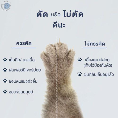 ควรตัดเล็บแมวหรือไม่