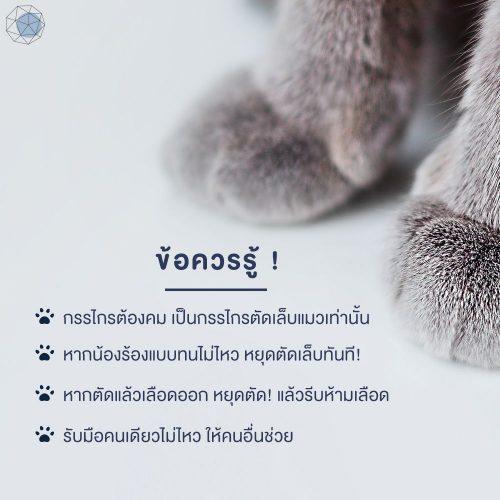 ข้อควรรู้ในการตัดเล็บแมว