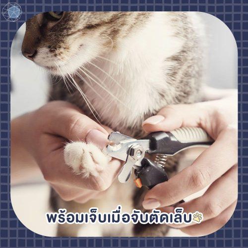 อยากเลี้ยงแมว ต้องพร้อมเจ็บเมื่อตัดเล็บ