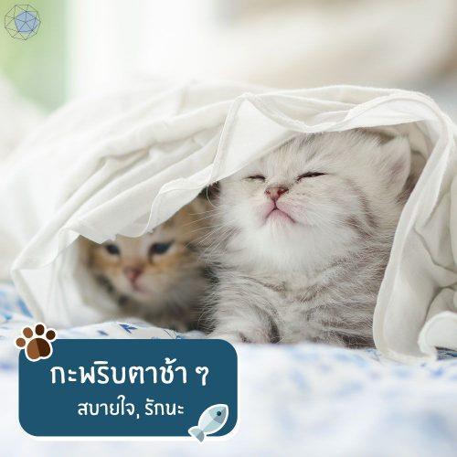 แมวกะพริบตาช้า ๆ