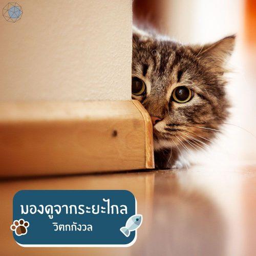 แมวมองดูจากระยะไกล