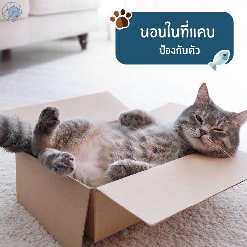 แมวชอบนอนในที่แคบ