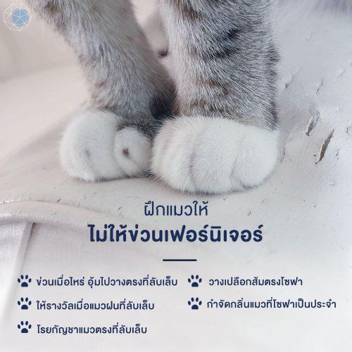 วิธีฝึกแมวไม่ให้ข่วนเฟอร์นิเจอร์