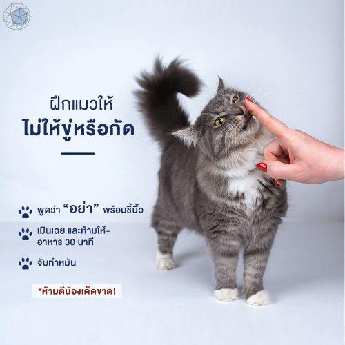 วิธีฝึกแมวไม่ให้ขู่หรือกัด