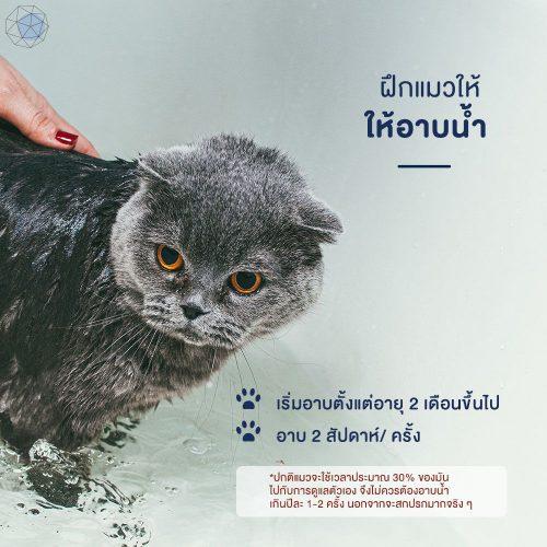 วิธีฝึกแมวอาบน้ำ