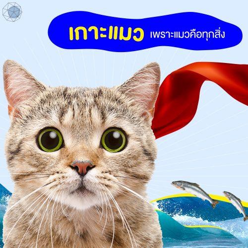เกาะแมว (V.) เพราะแมวคือทุกสิ่ง