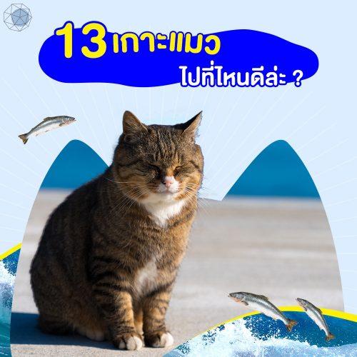 13 'เกาะแมว' ไปที่ไหนดีล่ะ ? 