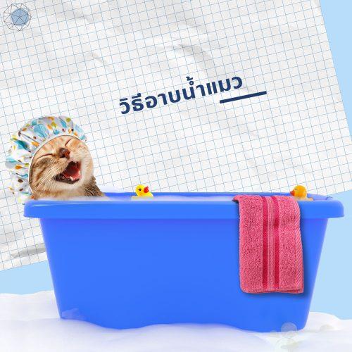 ขั้นตอนและวิธีอาบน้ำแมว