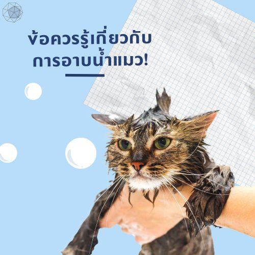 ข้อควรรู้เกี่ยวกับการอาบน้ำแมว