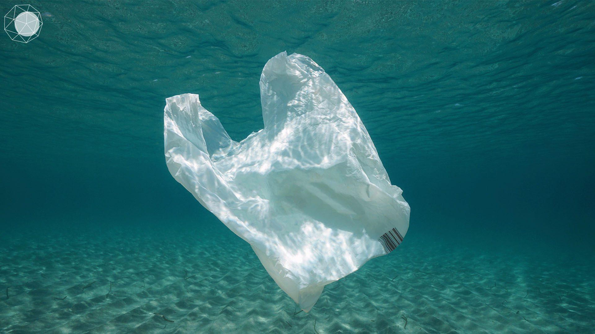 ลดขยะพลาสติกจากท้องทะเล_cover