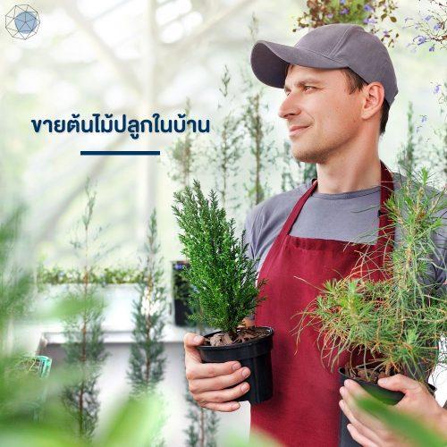 ธุรกิจเล็กๆ: ขายต้นไม้